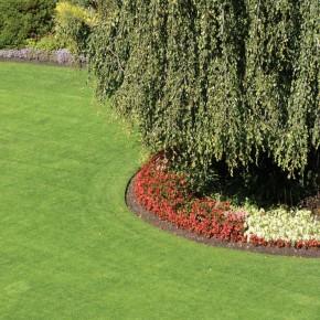 Çim Tohumu 5 Mix Grass Karışımı - 10 kg