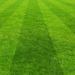 Çim Tohumu Karışımı Spor Alanları - 10 kg