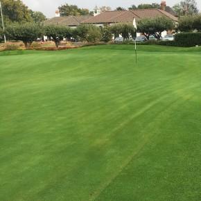 Golf Mix Grass Çim Tohumu - 10 Kg