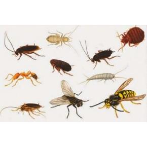 Böcek Yakalama Zamkı