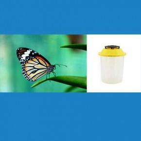 Doğal Kelebek Yakalama Tuzağı