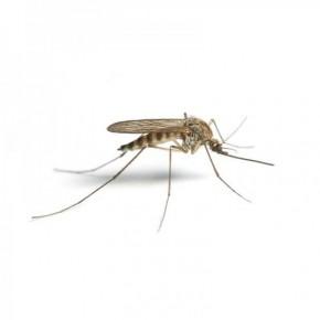 Doğal Sivrisinek Yakalama Tuzağı