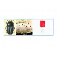 Erik Yazıcı Böceği Feromon Tuzağı