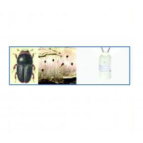 Erik Yazıcı Böceği Feromonu