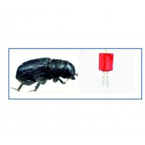 Gürgen Kabuk Böceği Feromon Tuzağı