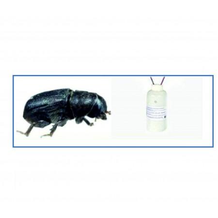 Gürgen Kabuk Böceği Feromonu
